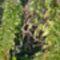 Vácrátóti Botanikus kert 2