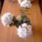 vegyes virágok 3