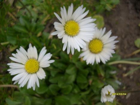 virágok máciusban. 004