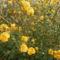 sok-sok virág egy bokron