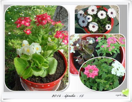 Tavasz a kertben 1