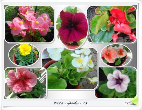 Tavasz a kertben 3