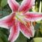 virágaim 061