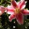 virágaim 183