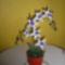 Ajándékba készült Orchidea!