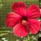 júliusi virágzás 5