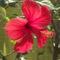 júliusi virágzás 9
