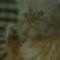 Filip cicám 1