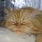 Filip cicám 23
