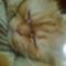Filip cicám 2
