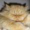 Filip cicám 8