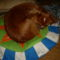 Kutyák 1 Ágyikó