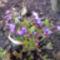 tavaszi virágok 012