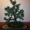 fa/bonsai