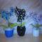 Hétvégi virágaim