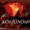koszonomrozsa_694111_75639