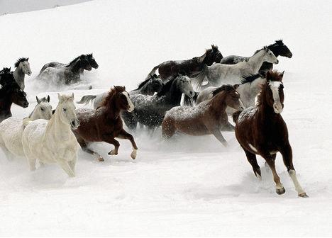 ló-hó
