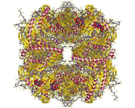 Exoszóma RNáz