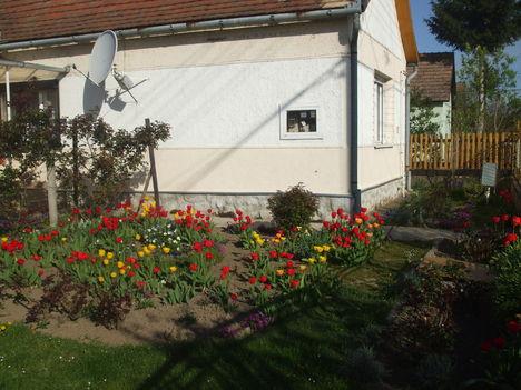 DSCF0334 tulipán kavalkád