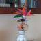 P1050119 Papagájvirág