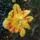 Botanikuskert-május