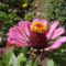 virágaim 10