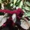 virágaim 11