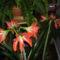 Szobai virág 4
