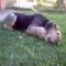 Angie kutyám