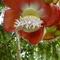 Fleur boulet decanon