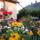 nyári kert