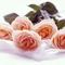 Rózsa Katicának