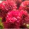 Emlékezünk fájó szívvel, szeretettel drága Szüleinkre, közeli és távoli rokonainkra, barátainkra és ismerőseinkre! Emlékük legyen Áldott! Ámen. Saját készítésű képek saját virágaimmal. 2