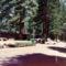 Kisvasút Yosemite