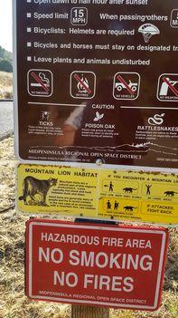 Puma veszély Californiában 2017