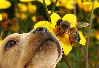 A méhecske nem ennivaló - 01