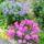 vegyes- virágaim