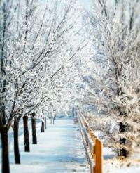 Snowy_Day