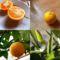 Narancs saját termés