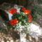 nyíló muskátli fehér virággal