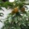 Gyümölcs 1