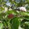 Gyümölcs 3