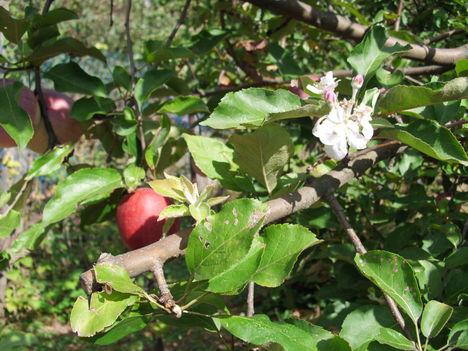 Gyümölcs 5
