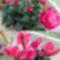 Télen is nyíló virágok