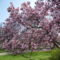 tavasz Szeged 018