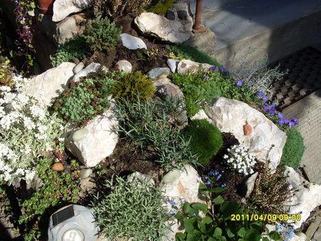 Virágaink 005