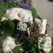 Virágaink 006