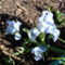 Virágaink 018