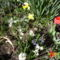 Virágaink 026