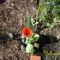 Virágaink 027